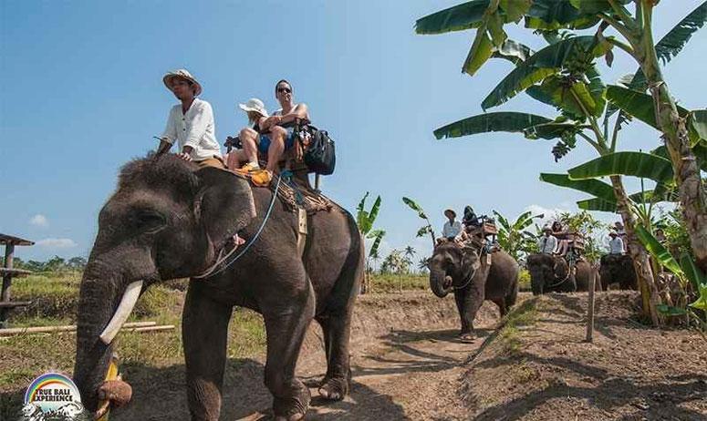 bali elephant ride tour package