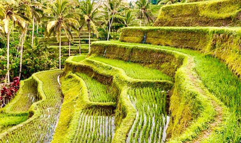 , Bali Cheap Tour Packages